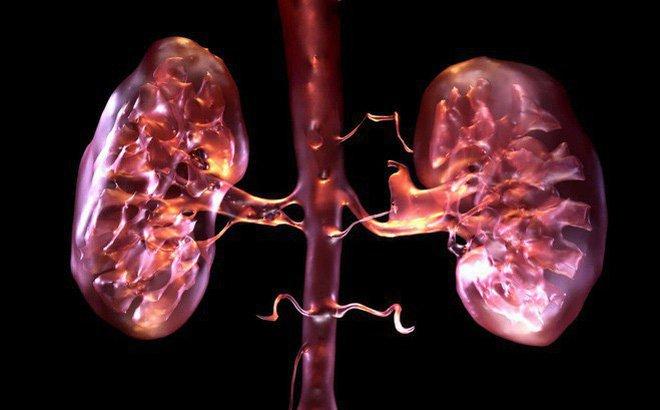 Suy thận mạn ở giai đoạn II, III, IV có thể hỗ trợ điều trị bảo tồn