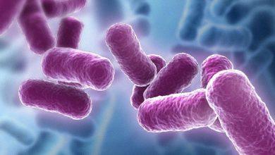Photo of Top 5 loại bào tử lợi khuẩn tốt nhất hiện nay 2021